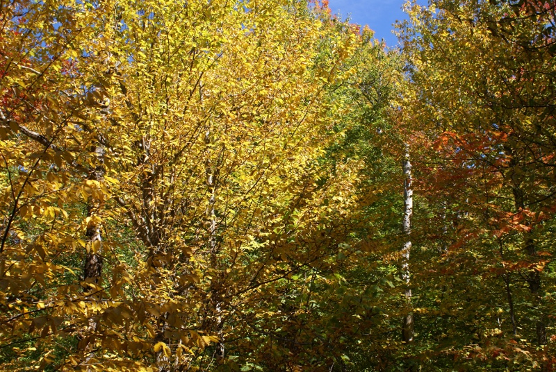 Champney Falls Trail - Fall Colors