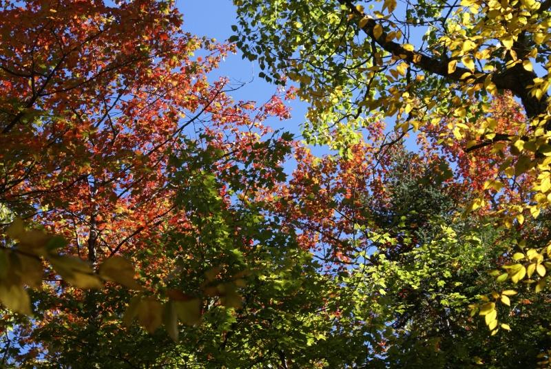 Sabbaday Falls - Fall Colors