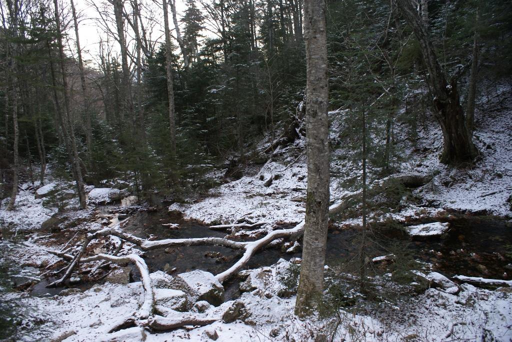 Drakes Brook Near 2500 Feet