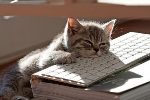 kitten-keyboard