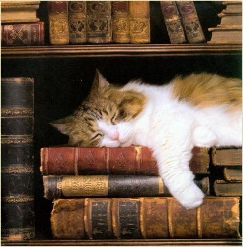 kitten-books