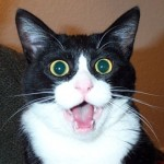 CAT-SHOCKED