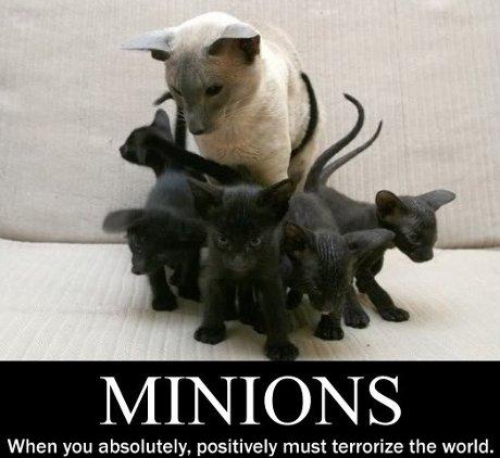 cat_minions
